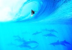 Being in the presence of marine animals while swimming or surfing in the ocean is an amazing and humbling experience.  One time I saw a dolphin boost out of the water to backflip over my friend getting barreled.  Unreal.