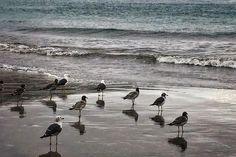 Ayer paseando por la playa después de atrapar pokémones #latepost #beach #birds #stroll #seagull #outdoors