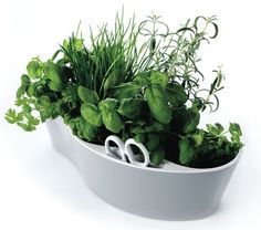 Small container herb garden