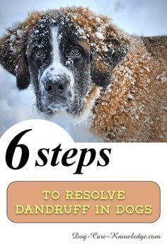 How To Get Rid Of Dog Dandruff In Six Easy Steps Using This Natural Remedy Based Based In 2020 Dog Dandruff Dog Skin Care Dog Skin Problem
