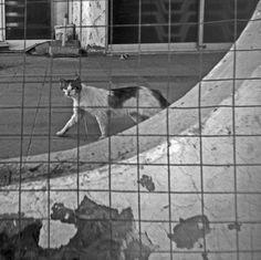 Grid Cat. Kos, Greece.  © Chris Trew / Plastic Cameras 2012