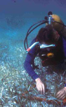Academic Unit Systems Puerto Morelos Reef