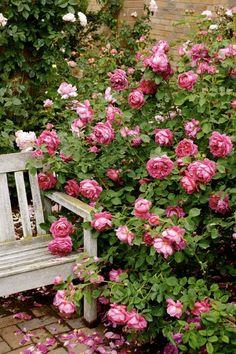Ruusuja.ruusuja..