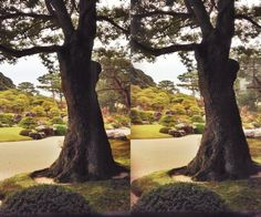 Garden of Adachi Art Museum, Tottori, Japan
