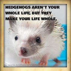 Hedgehog=hedgehug!