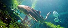 Yongala Wreck Australia