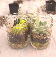 Your DIY Mason Jar Terrarium Tutorial | design district