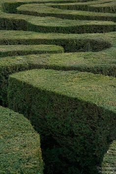 the hedge maze by Chris Colhoun