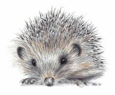 ♡☆ Beautiful Hedgehog Art ☆♡