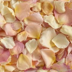 GrowersBox.com: Flowers: 3,000 Freeze Dried Rose Petals Mixed Pastels: Rose Petals  Looking for affordable decorations for your wedding or event venue? Look no further! Check out our section of ROSE PETAL SPECIALS for bargain bulk packages of rose petals from The Grower's Box (www.growersbox.com)!