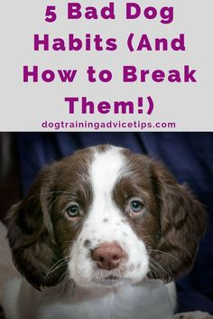 5 Bad Dog Habits (And How to Break Them!) - Dog Training Advice Tips - 5 Bad Dog Habits (And How to Break Them! Dog Commands Training, Basic Dog Training, Puppy Training Tips, Training Dogs, Potty Training, Leash Training, Training Schedule, Agility Training, Safety Training