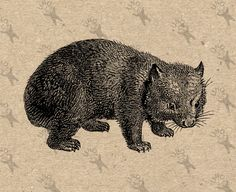 Vintage Black and White image Wombat Australia Instant Download Digital printable retro drawing picture clipart graphic HQ 300dpi by UnoPrint on Etsy