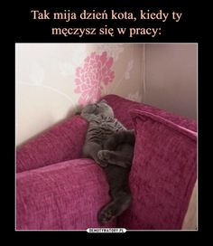 Happy Animals, Animals And Pets, Polish Memes, More Than Words, Best Memes, A3, Funny Quotes, Humor, Laughing