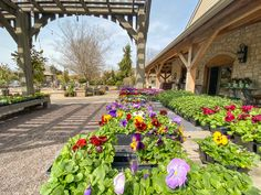 Visit Frisella Nursery or visit us online to see what you should be planting all around your yard in the Spring 2021 Season. We have so many options and are happy to answer any questions that you may have! Landscape Services, Unique Plants, Spring Blooms, Home And Garden, Nursery, Yard, Seasons, Planting, Happy