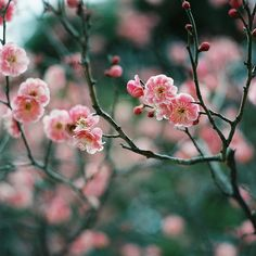 plum by ditao on Flickr.