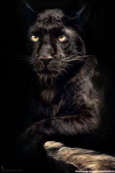 Endangered Wild Animals Potraits - That is a damn shame! Shame on us!!