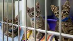January 24th is Change A Pet's Life Day! It's a chance to celebrate making positive changes in cats' lives, to raise awareness about shelter animals in need of homes, and to encourage adoption. Pet Day, A Day In Life, Pet Life, Cat Facts, Animals And Pets, Animals Images, Animal Shelter, Funny Cats, Your Pet