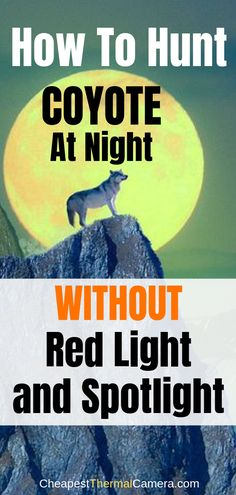 How to Hunt Coyotes at Night WITHOUT a red light and spotlight? Check out these coyote night hunting tips, and watch the interesting videos on outdoor life coyote hunting that you can certainly pick u Elk Hunting Tips, Wild Boar Hunting, Hunting Videos, Hunting Humor, Bear Hunting, Coyote Hunting, Archery Hunting, Fishing And Hunting, Pheasant Hunting