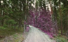 Jon Rafman - amazing images captured by google map street view