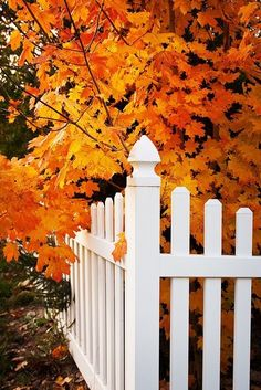 White picket fence surrounded by autumn leaves...