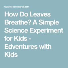 How Do Leaves Breathe? A Simple Science Experiment for Kids - Edventures with Kids