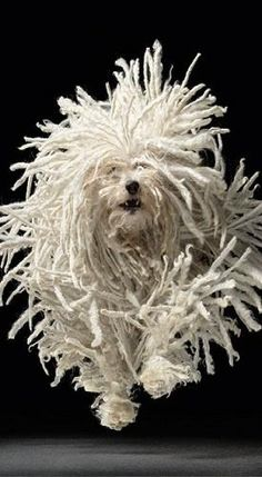 "Komondor a. ""Mop"" Dog by Tim Flach Mop Dog, Dog Cat, Pet Pet, Chien Komondor, I Love Dogs, Cute Dogs, Hungarian Puli, Animals Beautiful, Cute Animals"