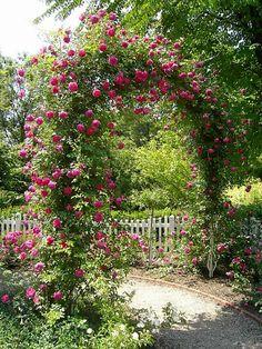 Красивый Сад из Роз. Обсуждение на LiveInternet - Российский Сервис Онлайн-Дневников