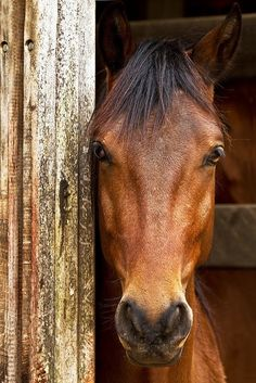 The Face...#horse #animal