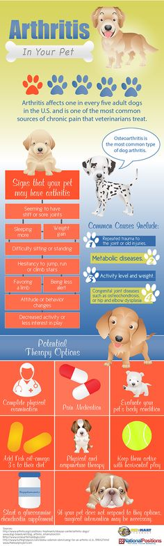 Arthritis In Your Pet