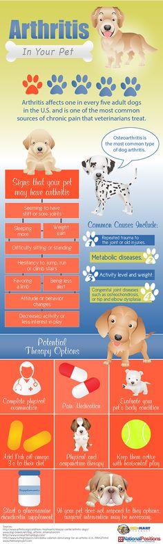 Arthritis In Your Pet