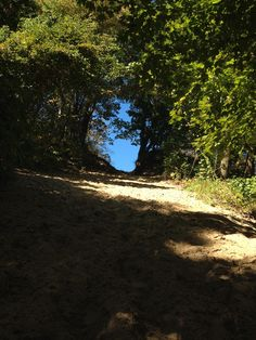 Trail 8, Indiana Dunes State Park-- best trail uphill ever!!!!!