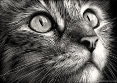 cat face Cats face - scratchboard art - this artist must be really good - looks so realistic Animal Drawings, Pencil Drawings, Realistic Drawings Of Animals, Realistic Cat Drawing, Pencil Sketching, Drawing Animals, Animal Sketches, Art Scratchboard, Cat Embroidery