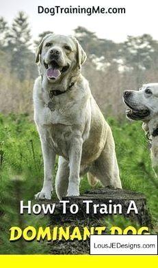 Labrador Training Pdf