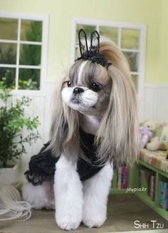 Super dogs grooming styles shih tzu ideas Super dogs grooming styles shih tzu ideas Source by The post Super dogs grooming styles shih tzu ideas appeared first on Hines Havanese. Chien Shih Tzu, Perro Shih Tzu, Shih Tzu Puppy, Shih Tzus, Yorkie, Dog Grooming Styles, Puppy Grooming, Cute Puppies, Cute Dogs