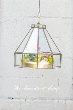 The Hanging Succulent Lamp - This picture does not do it justice the other pictures on this ite of the succulent plants used are gorgeous! Check it out!