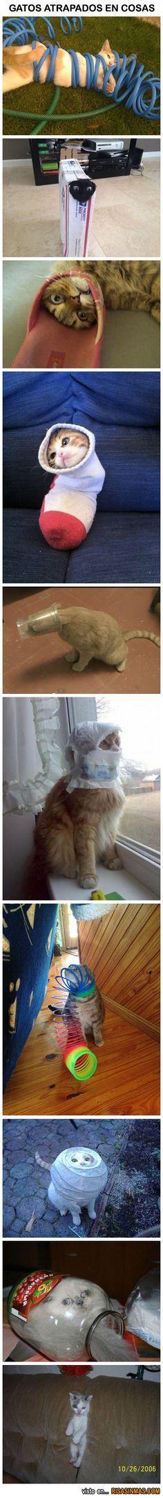 Gatos atrapados dentro de cosas.