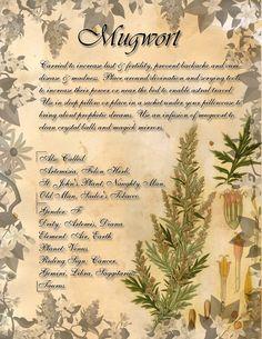 Book of Shadows: Herb Grimoire - Mugwort by CoNiGMa on DeviantArt Wicca Herbs, Witchcraft Herbs, Green Witchcraft, Magic Herbs, Herbal Magic, Wiccan Spell Book, Wiccan Spells, Grimoire Book, Healing Herbs