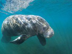 Nature & Wildlife - Fort Myers Beach & Sanibel Island Florida - Ding Darling - Fort Myers & Sanibel