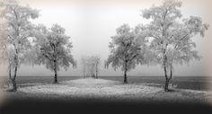 Winter Trees - FONDOS PARA TWITTER   Fotos para twitter