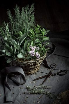 Get The Perfect Herb Garden With These Simple Tips Herb gardening is an excellent way to make sure that your family is getting the best produce that they can. Dark Food Photography, Still Life Photography, Spices And Herbs, Fresh Herbs, Herb Garden Design, Herbs Garden, Garden Ideas, Aromatic Herbs, Arte Floral