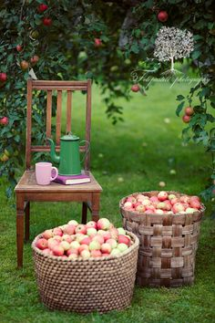 Autumn in the Orchard....a good book, some hot spiced cider, a chair to sit in and the enticing smell of apples in the air - life is good! ||by loveliegreenie