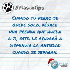 #Mascotips Cuando tu perro se quede solo, déjale... - Hospital Veterinario Oftalvet