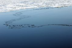 I love the icy sea. Specially when the ice is melting!