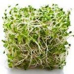 Τί είναι τα φύτρα και πώς καλλιεργούνται