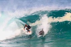 An amazing video showing a dolphin sharing a wave with a pro-surfer has emerged. The video shows Soli Bailey, ride a barrel with the dolphin in shark infested waters off South Australia. Weird Creatures, Sea Creatures, Ski, Dolphin Photos, Pro Surfers, Surf City, Pacific Beach, Sea Waves, Longboarding
