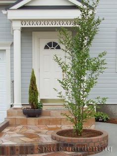 植栽 シンボルツリー 落葉樹 シャラ Courtyards, Entrance, Exterior, Gardening, House, Garden, Plants, Entryway, Door Entry