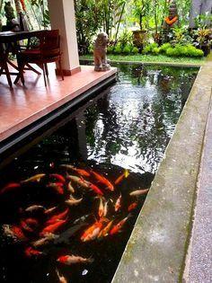 Lovely swirl of Koi fish in Ubud, Bali
