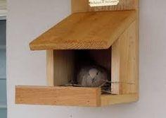 American kestrel nest box plans nature how tos for Dove bird house plans