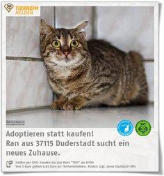 Ran ist ein Fundtier aus dem Tierheim Ruderstadt.  http://www.tierheimhelden.de/katze/tierheim-duderstadt/ekh/ran/9903-1/  Ran ist noch etwas zurückhaltend und schüchtern, nach einer gewissen Zeit taut sie aber wieder auf.  Kinder sollten keine im Haushalt leben. Ran hat außerdem Diabetes, sie braucht allerdings nur Diätfutter und kein Insulin.