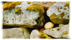 Haines Alaska Rock Wall see available sizes by Creatography, $29.00